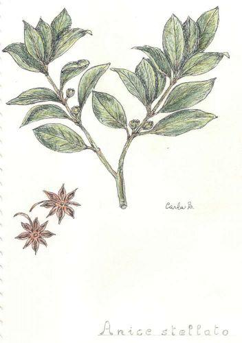Anice stellato (sacchetto) g.50