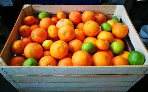 Casse Di Mandarino Varietà Primosole 20 Kg