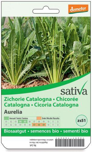 Cicoria catalogna 1.25 g BIO  (min. acquisto 10 pezzi)