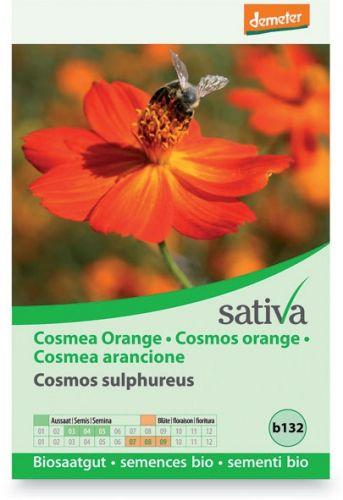 Cosmea arancione 1 g BIO  (min. acquisto 10 pezzi)