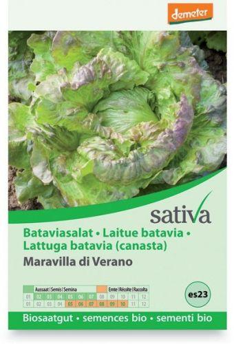 Lattuga batavia - maravilla di verano (canasta) 0.5 g BIO  (min. acquisto 10 pezzi)