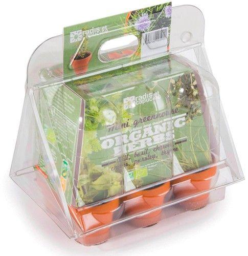Mini serra 6 vasi - aromatiche 6 pz BIO  (6 pezzi)