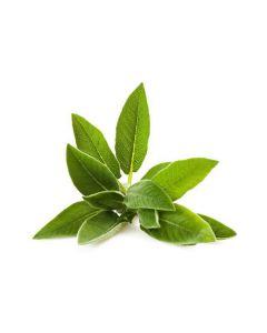 Salvia Contusa disidratata 1kg