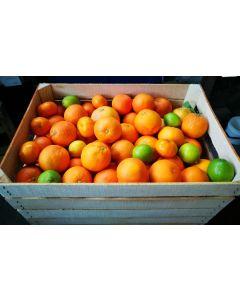 Casse Di Mandarino Varietà Primosole 15 Kg