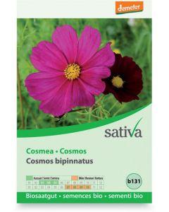 Cosmea - cosmos bipinnatus 1 g BIO