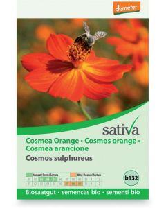 Cosmea arancione 1 g BIO
