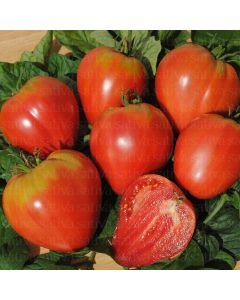 Pomodoro cuore di bue 0.25 g BIO